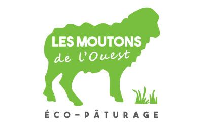 Les Moutons de l'Ouest : retour sur 3 ans d'éco-pâturage au service de la biodiversité