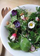 Salade printanière toute verte