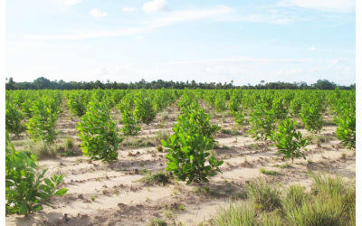 Tree-nation : planter six arbres pour compenser un mois de CO2
