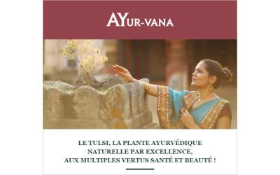Ayur-vana – Le Tulsi, la plante ayurvédique par excellence