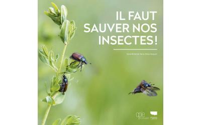 Il faut sauver nos insectes