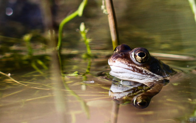 J'agis pour la nature ! : le bénévolat nature – ça marche