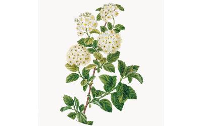 Cahier de 5 grandes plantes antidouleur
