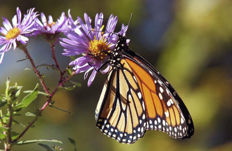 Des cadeaux écolos qui protègent les insectes butineurs