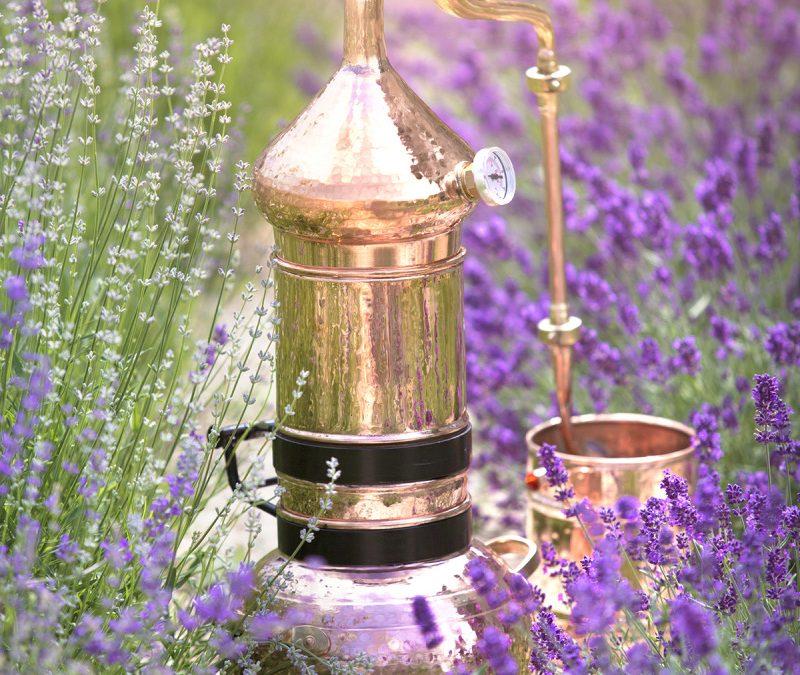 Les huiles essentielles en prise orale : un concentré de puissance à utiliser à bon escient