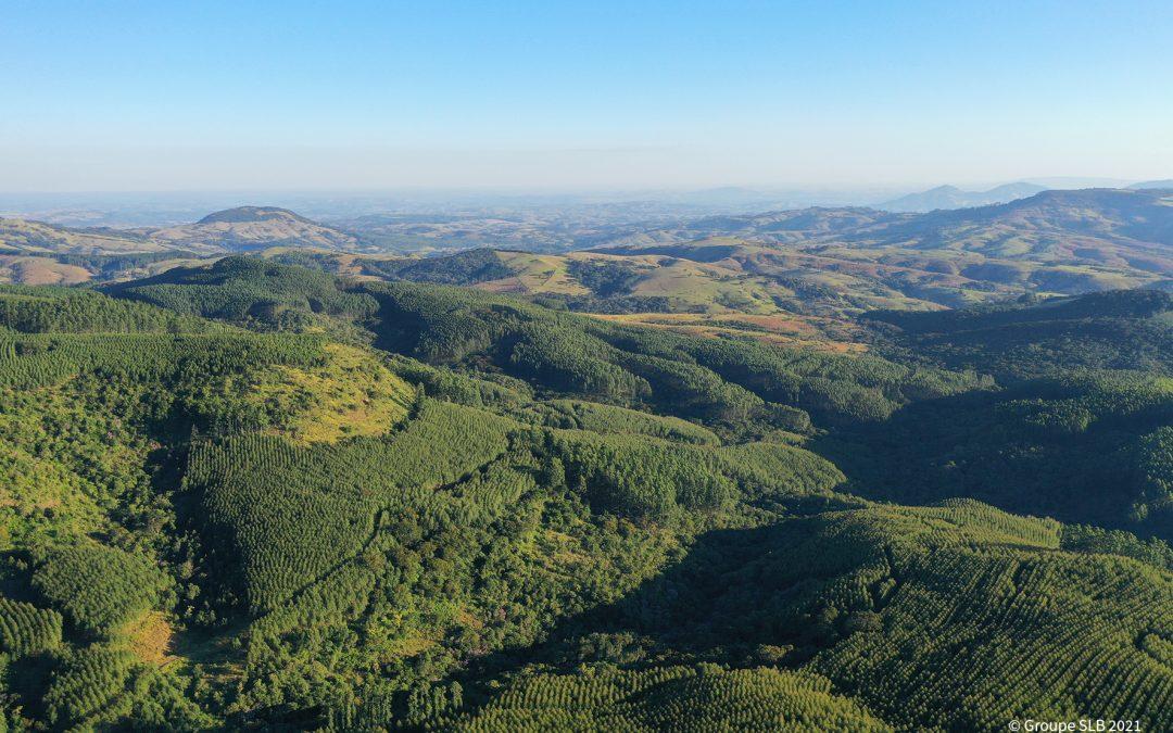 Le programme d'afforestation du Groupe SLB au Brésil sélectionné par Sweep et Kinomé