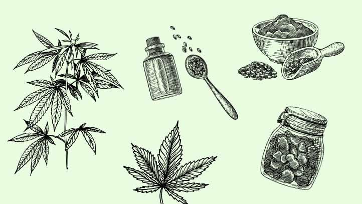 Le Chanvre, une plante écologique aux multiples usages et vertus