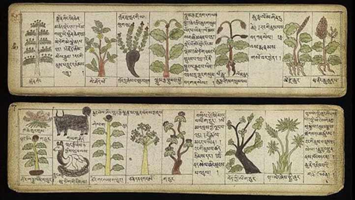 La médecine Traditionnelle Tibétaine, médecine douce bouddhiste