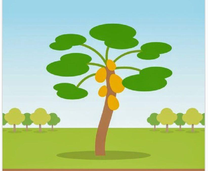 Treedom dévoile 3 astuces faciles pour une rentrée écologique et économique