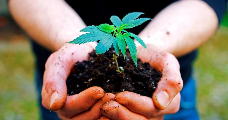 Grand dossier : Le chanvre, une plante d'exception !