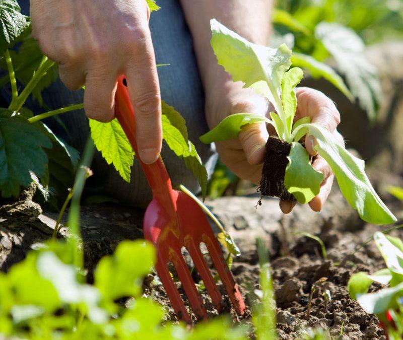 Adaptez vos techniques de jardinage pour préserver le climat